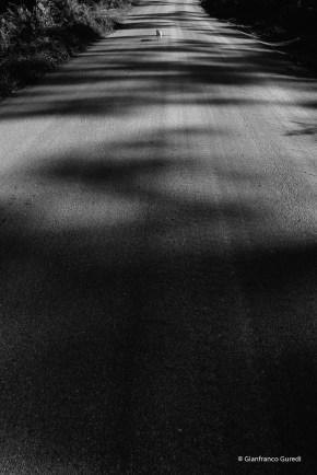 Trinca en el asfalto