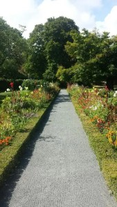 residential garden path