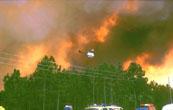 https://i1.wp.com/gfmc.online/wp-content/uploads/wildfire_287_a.jpg?resize=173%2C110&ssl=1 (11510 Byte)