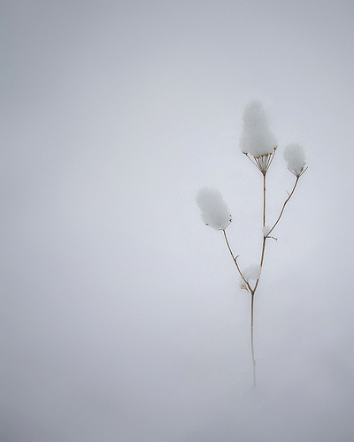 Simple things are often beautiful. The image is CC, a work by: Ferran Jordà / bw-color.com .