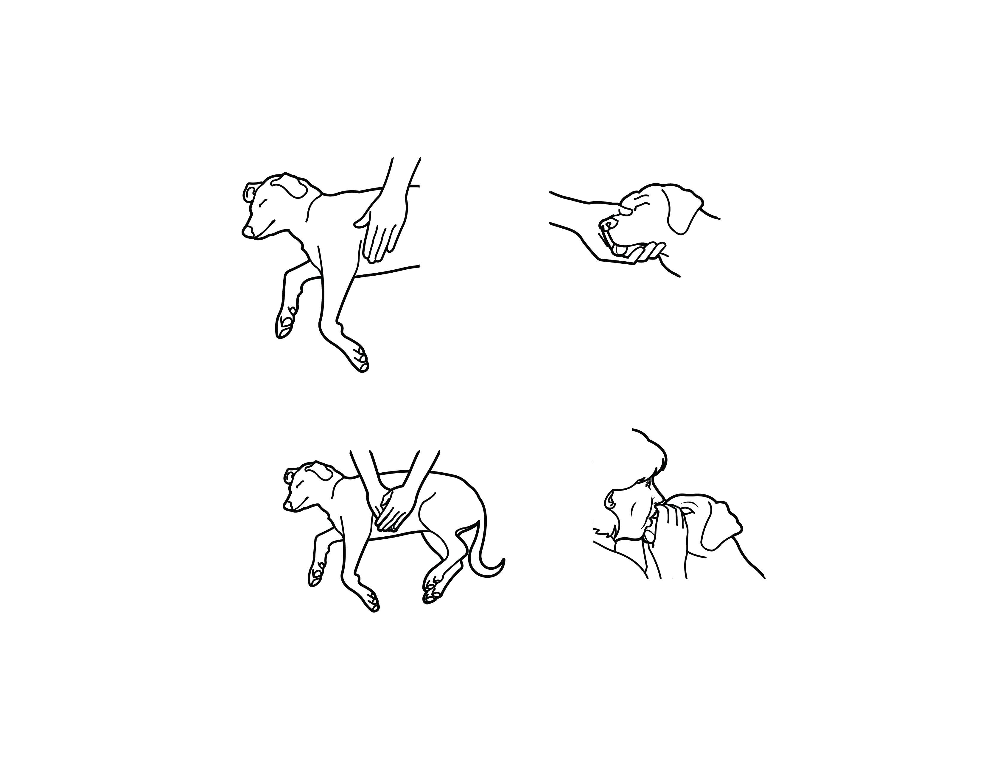 Step By Step Instructions To Give Your Dog Cpr