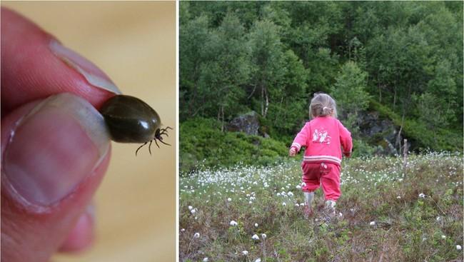 Fästingar och barn (Foto: Renate Krangsaas / Monika Mahle Aarset)