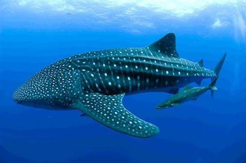 اكبر حوت في العالم اكبر الحيتان في العالم بنات كول