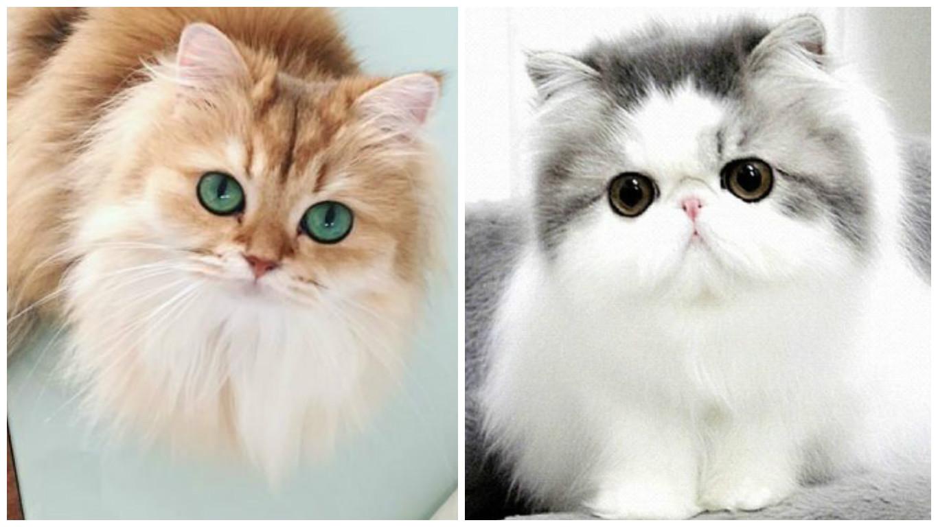 قطط جميلة اجمل صور وخلفيات القطط بنات كول