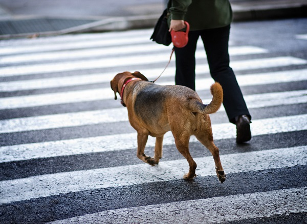 Understanding Your Legal Options if You Are Injured By a Service Animal