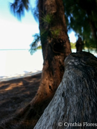 beachpicnic06022017a-6