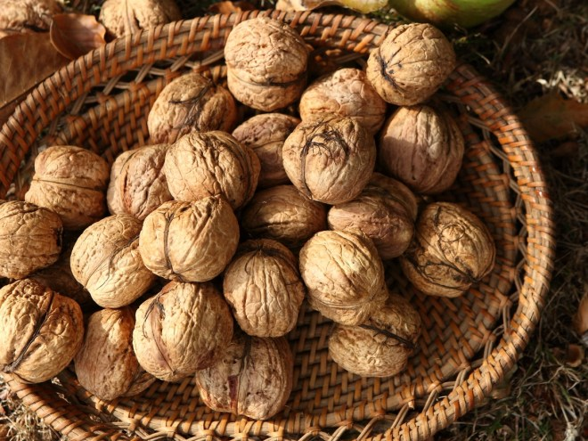 Did you know that nut contains much beneficial nutrions?