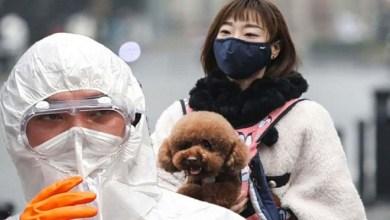 صورة بعد كورونا.. اكتشاف فيروس جديد قاتل في الصين