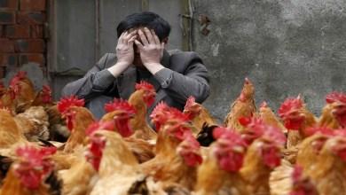 """صورة بعد فيروس """"كورونا"""".. تفشي فيروس """"إنفلونزا الطيور"""" في الصين"""