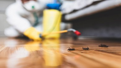 صورة 3 نصائح للتخلص من حشرات فصل الربيع