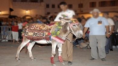 """صورة """"كورونا"""" تمنع تنظيم مهرجان لـ """"الحمار"""" بالمغرب"""