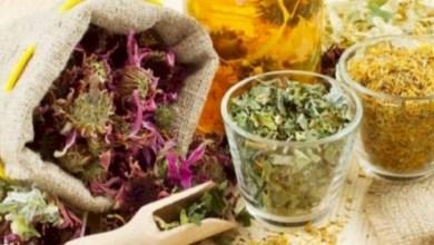 صورة أعشاب طبيعية تقلل من أعراض حساسية الربيع