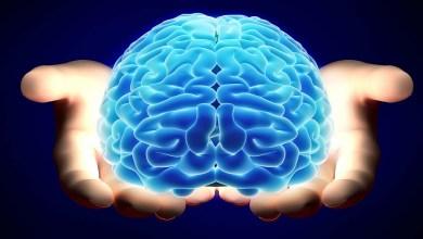 صورة 4 أطعمة غذائية تحسن وظيفة الدماغ