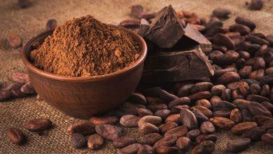 صورة لمحبي الشوكولاتة.. الكاكاو يحسن البصر والذاكرة