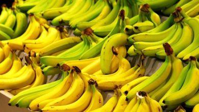 صورة حسب الخبراء.. أيهما أفضل الموز الأخضر أم الأصفر؟