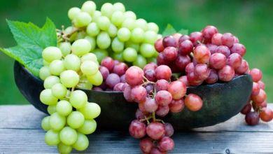 صورة فاكهة تقيك من أمراض العصر.. تعرفي على فوائد العنب