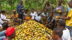 Cocoa farmers want COCOBOD to adopt cashless system