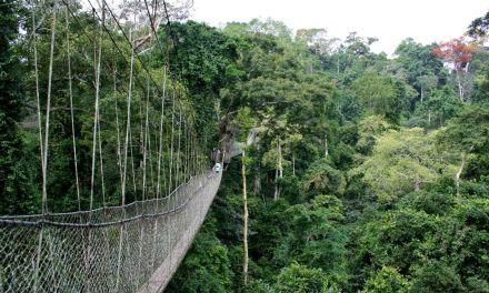 Ghana• Kakum National Park
