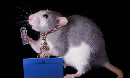 NIH study links cell phone radiation to cancer in male rats