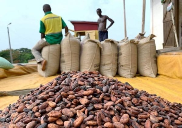 COCOBOD already selling cocoa at new increased prices for 2020/21 crop season
