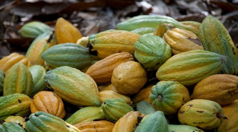 COVID-19 RESPONSE: 5 things Ghana Cocoa Board (COCOBOD) can reinforce to sustain the Cocoa Sector