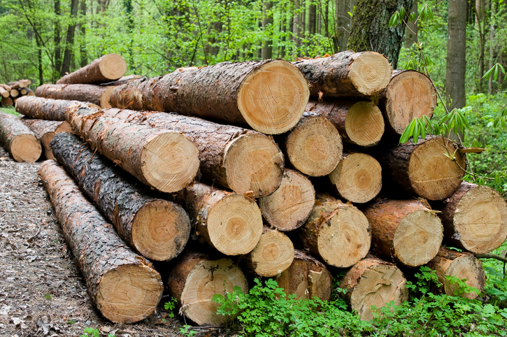 Ghana on Verge of Losing EU Timber Trade Opportunities