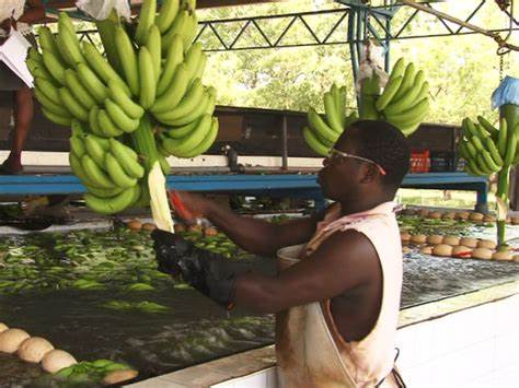 Ghana-UK Trade Agreement: British companies begin rejecting Ghanaian imports