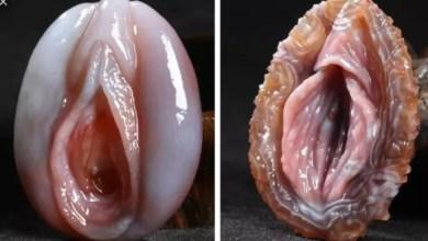 This Fish Looks Like Human Body Part (Photo)
