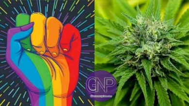 What Legalization Can Go On In Nana Addo's 2nd Term, LGBT Or Cannabis?