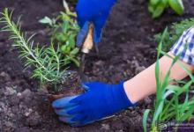 How to grow herbs and prepare for dry season
