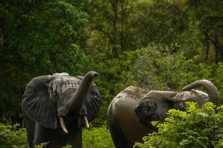 the Best places to visit in Ghana - Mole National Park