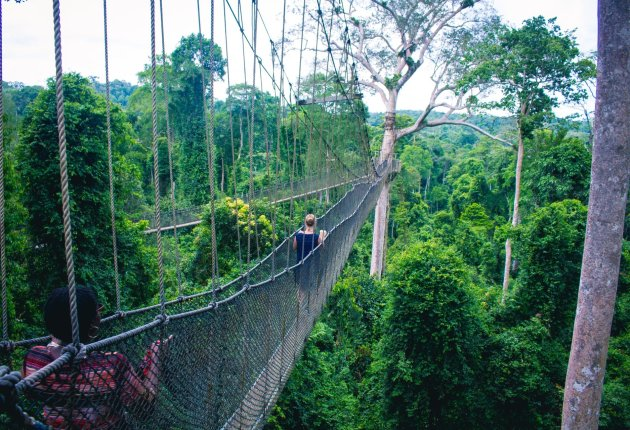 Canopy Walk of Kakum national part in Central Region