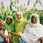 No cash for free fertilizers –Agric Minister
