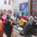 Photos :Chief dashes cow to Adom TV for showing 'Kumkum Bahgya'