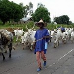 Fulani herdsmen should be driven out of Ghana -NPP