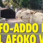Akufo-Addo Begs Paul Afoko With Sheep & Schnapps