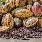850,000 tonnes of cocoa expected to be produced by Ghana in 2019/20 season