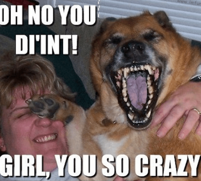Funny-dog-laughing