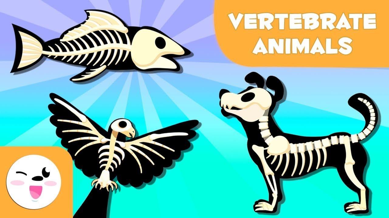 مجموعات الحيوانات – الفقاريات واللا فقاريات بدون موسيقى | ANIMAL GROUPS Vertebrates & Invertebrates  No Music