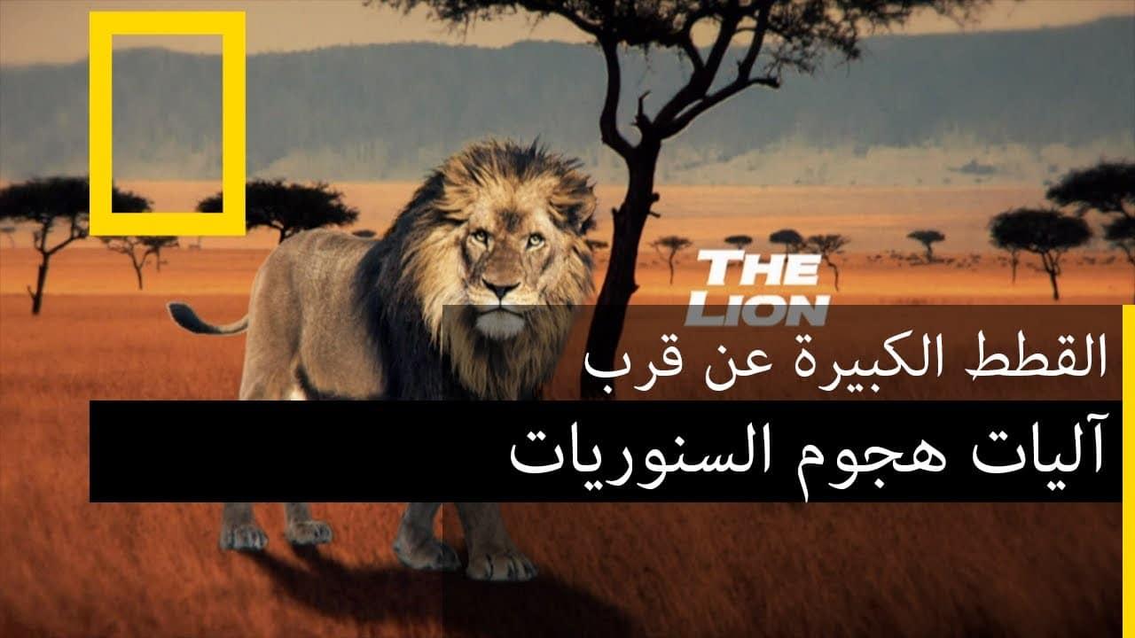 آليات هجوم السنوريات | ناشونال جيوغرافيك أبوظبي بدون موسيقى | The mechanisms of attacking felidae National Geographic Abu Dhabi No Music