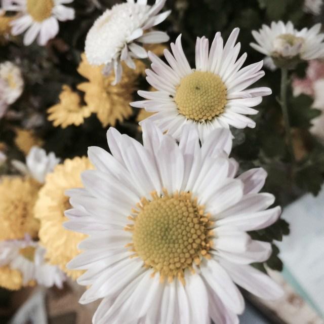 цветы от елены (9)