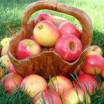 Использование яблок в домашней косметике.