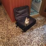 Тико отправляется в путешествие