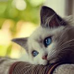 Кошка - наш независимый спутник.