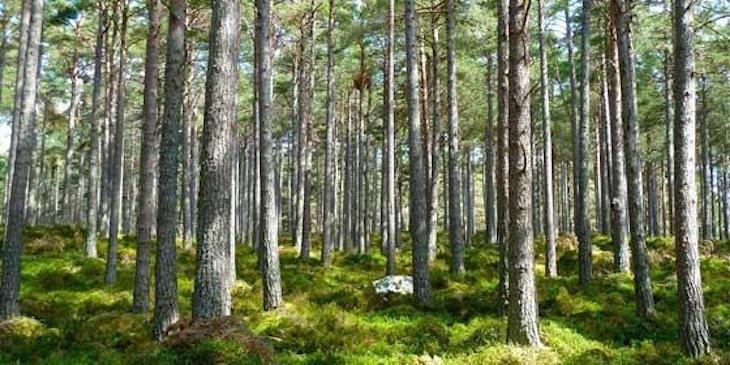 Árboles de distintas especies 'se ayudan'
