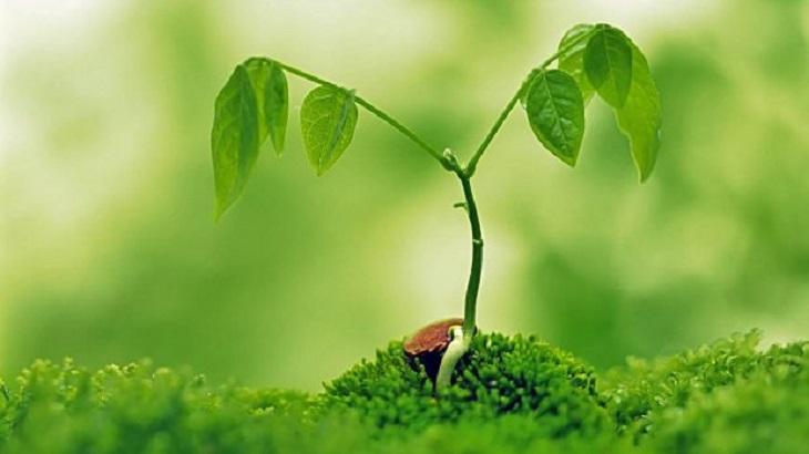 Cómo sobreviven las plantas