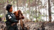 orangutan-kecamatan-samboja-kutai-kartanegara_20151016_084339