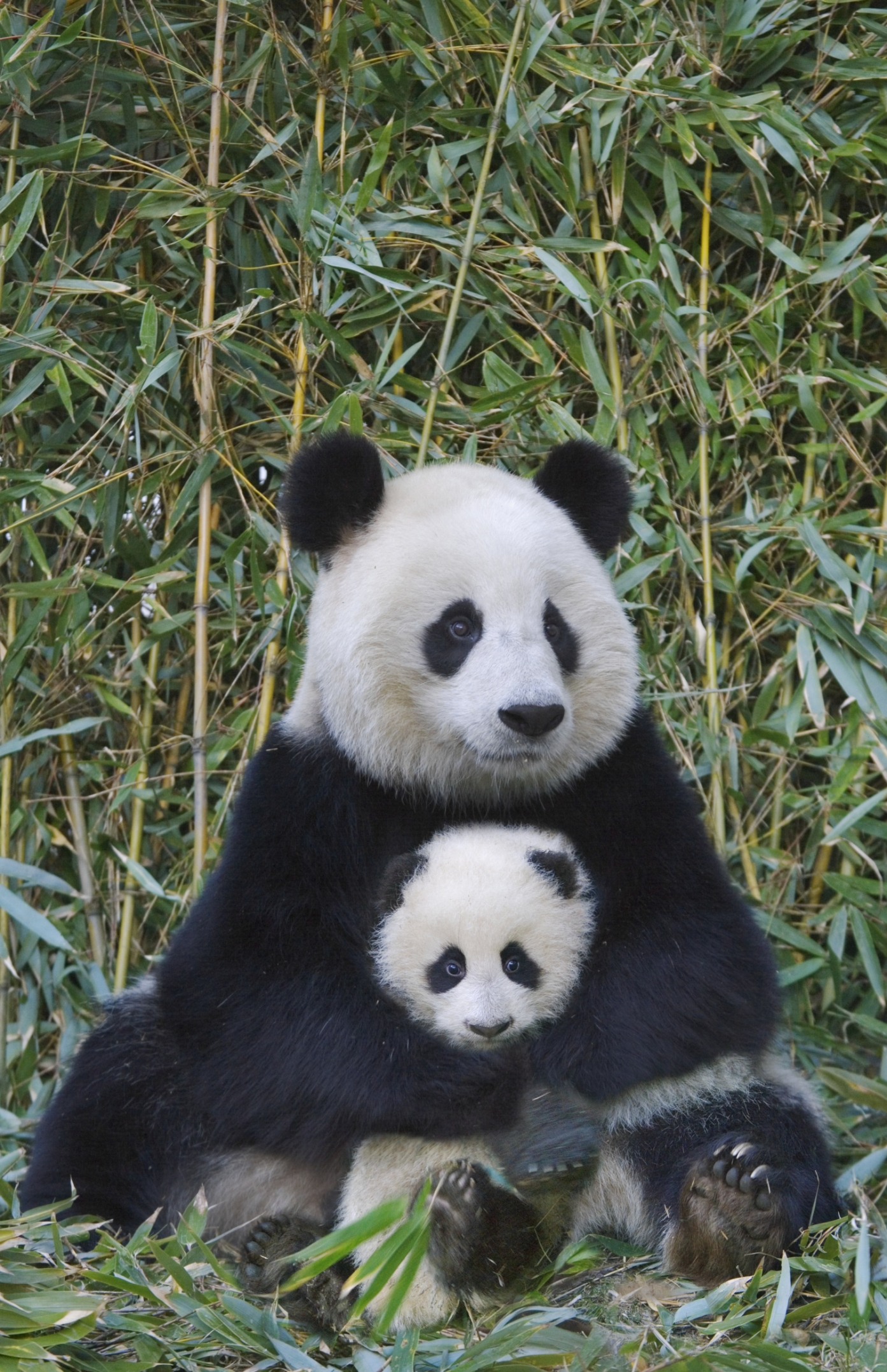 Animal Mother And Baby Pictures