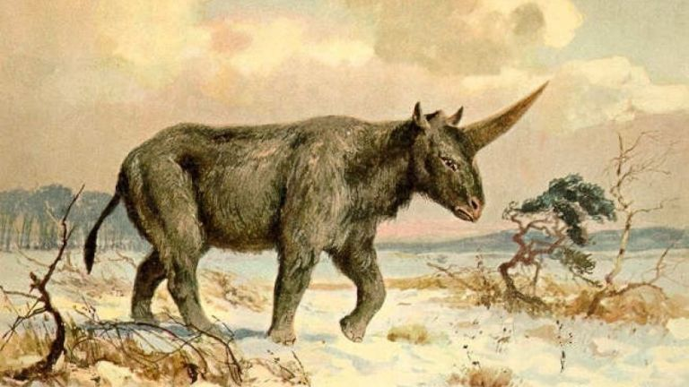 Elasmotherium was an extinct genus of giant rhinoceros native to Asia during the Pliocene through Pleistocene eras. Colour printed illustration by Heinrich Harder from Tiere der Urwelt Animals of the Prehistoric World, 1916 Hamburg. Heinrich Harder (1858-1935) was a German landscape artist and book illustrator. These images come from a series of prehistoric creature cards published by the Reichardt Cocoa company in 1908. Natural historian Wilhelm Bolsche wrote the descriptive text.