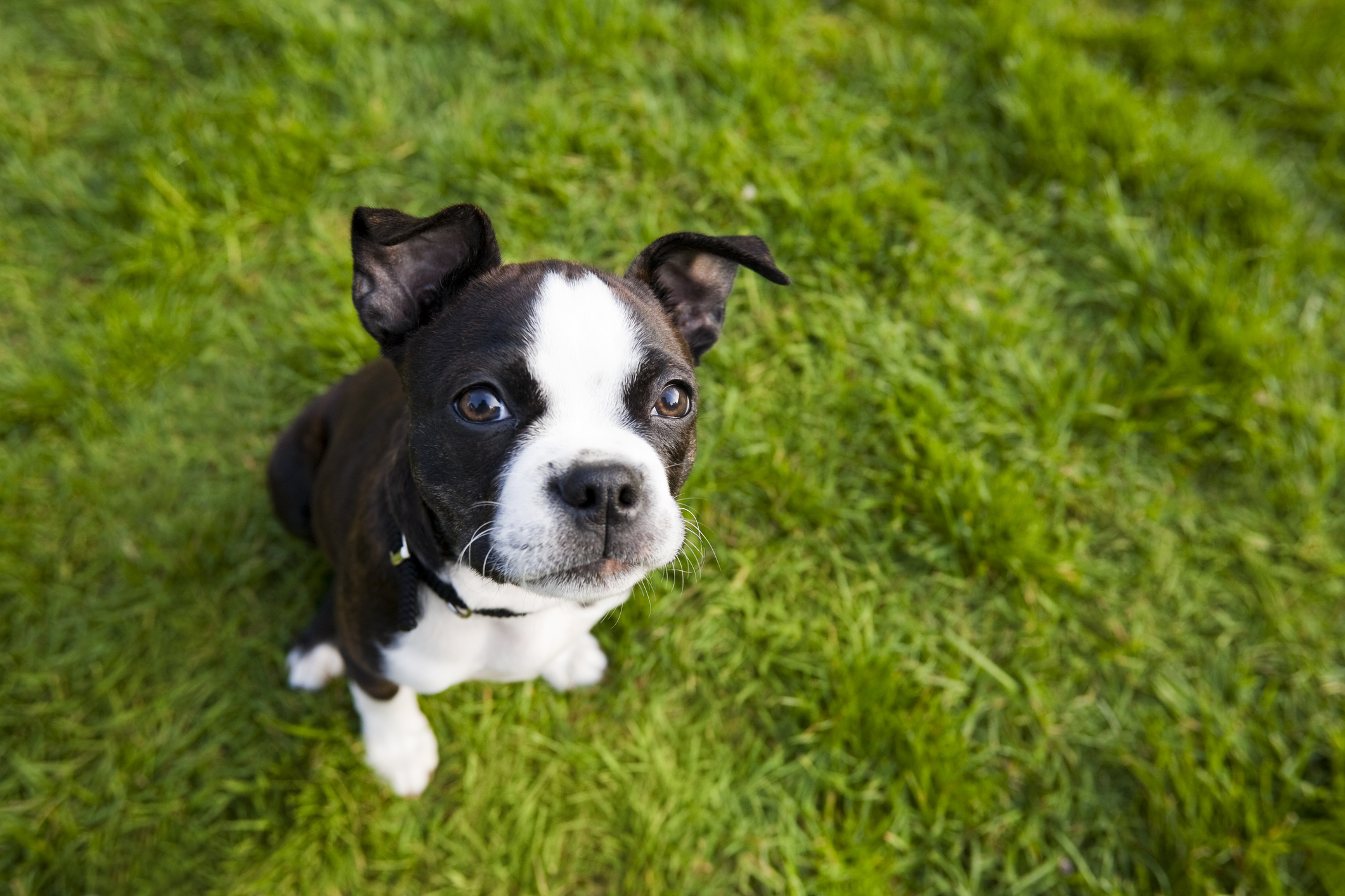 35 Best Small Dog Breeds